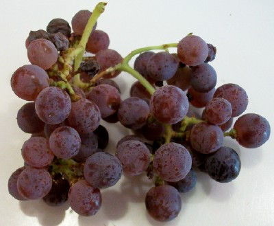 Sangiovese from Superstition Vineyard